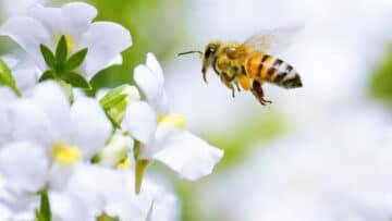 Propolis und Honig – Gesundes von der Biene
